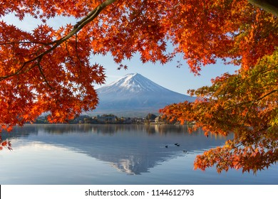 Fuji Mountain in autumn with colorful maple leaves at Lake Kawaguchiko,Yamanashi,Japan.