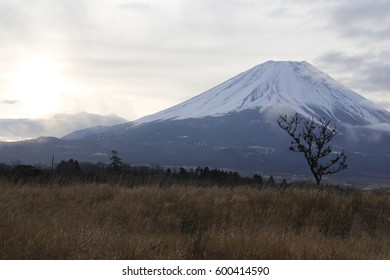 fuji Mountain grassland morning sun