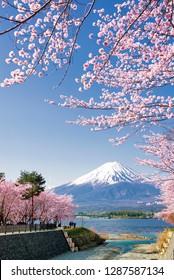 Fuji Mountain and Pink Sakura Branches at Kawaguchiko Lake