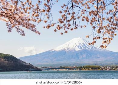 Fuji Mountain and Pink Sakura Branches in Spring at Kawaguchiko Lake, Japan