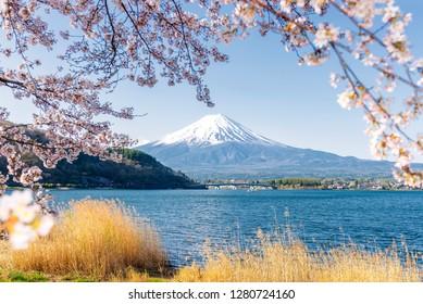 Fuji Mountain and Sakura Branches at Kawaguchiko Lake