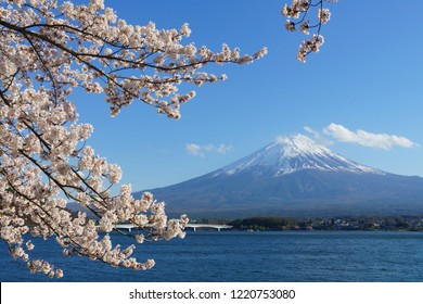 Fuji mountain with snow cover on the top with cherry blossom (sakura). Locate near lake Kawaguchiko, Japan