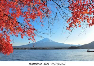 Fuji Volcano Mountain and Red Maple at Kawaguchiko Lake, Japan