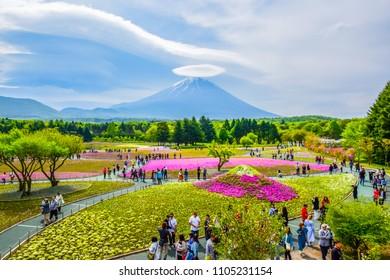 FUJIKAWAGUCHIKO, YAMANASHI JAPAN - MAY 13: Mount Fuji view behind colorful flower field at Fuji Shibazakura (moss phlox) Festival in Kawaguchiko, Japan