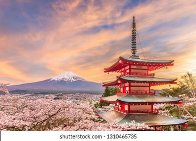 Fujiyoshida, Japan view of Mt. Fuji and pagoda in spring season with cherry blossoms at dusk.