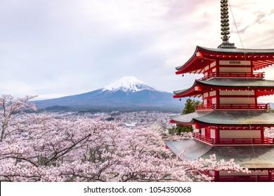 Fujiyoshida, punto de referencia de la pagoda roja Chureito de Japón sobre el fondo de la montaña Fuji, cielo claro casi en la pagoda roja clara puesta de sol con un árbol sakura rosado en flor en Japón.