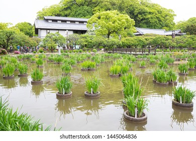 Fukuoka, Japan - April 30, 2019 : green garden park with pond at Dazaifu Tenmangu Shrine.