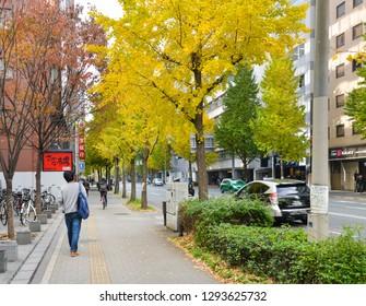 Fukuoka, Japan - November 25, 2018: People are walking along the beautiful ginkgo trees in Hakata area, Fukuoka, Japan