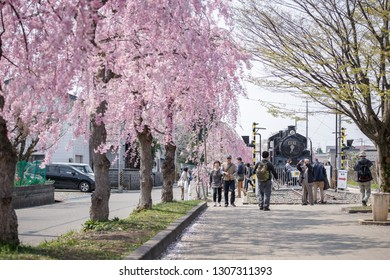 Fukushima, Japan -April 20, 2018 : Tourists passing blooming pink weeping cherry blossoms and a displayed stream train at Kitakata Nicchu Line ,an old railway line in Kitakata town, Fukushima, Japan.