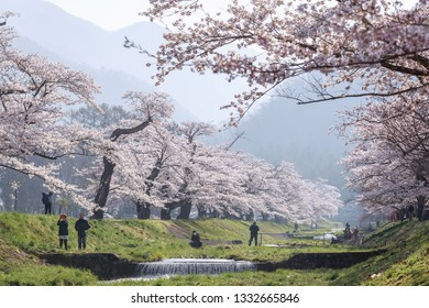 Fukushima/Japan - Apr 21,2018 : Large group of tourists and photographers taking photo of a tunnel of full blooming cherry blossom trees or Sakura trees along the banks of Kannonji River, Fukushima,