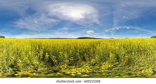 full 360 degree angle view seamless panorama in equirectangular spherical projection In the form of the Ukrainian flag. Panorama in a field rapseed canola colza in sunny day. Skybox for vr