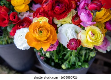 Full basket of colorful persian buttercup flowers or Ranunculus asiaticus bouquets in the flowers shop.
