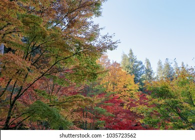 full of beautiful fall colors at Japanese Garden, Seattle Washington