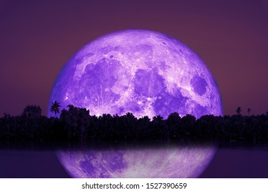 full Beaver Moon back on silhouette tree and reflection on river and night sky, Elements of this image furnished by NASA