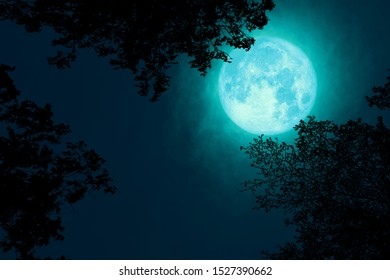 full Beaver Moon back on dark cloud on silhouette tree and the night sky, Elements of this image furnished by NASA