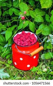 full bidon of ripe sweet raspberries