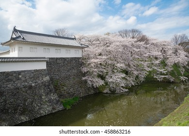 The full bloom Cherry-blossom trees along the Kajo castle moats (Yamagata castle site park). This park is a very famous and popular Cherry-blossom (Sakura) viewing spot in Yamagata prefecture, Japan