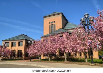 full bloom crab apple trees in front of buildings