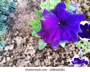 Full bloom flower in Baguio, Philipines