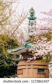 Full bloom of sakura flower cherry blossom in Zojoji temple with Tokyo tower, Japan