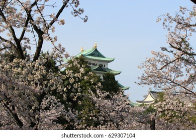 Full bloomed cherry blossoms with Nagoya castle