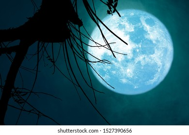 full blue Beaver Moon back on dark cloud on silhouette dry tree and the night sky, Elements of this image furnished by NASA