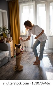 Full body barefoot lady in casual outfit teaching dog to give high five and giving food to pet in cozy living room at home