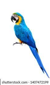 full body of blue-and-yellow or blue-and-gold macaw beautiful parrot isolated on white background
