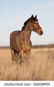 Full body portrait of brown pony in sunlight.