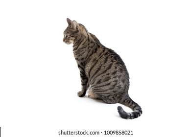 Full body side view of a grey striped tabby cat looking away isolated on a white background