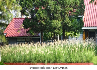 Full flowering grass in front of the house
