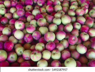 full frame apples for sale market stand red organic fruits