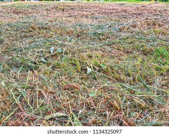 Full Frame Background of Brown Dry Grass Field