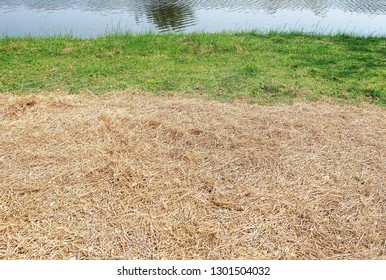 Full Frame Background of Fresh and Dry Grass by the Pond