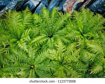 Full Frame Background of Fresh Green Ferns and Rocks