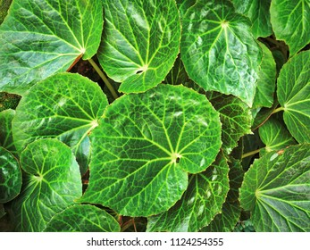 Full Frame Background of Green Leaves Texture