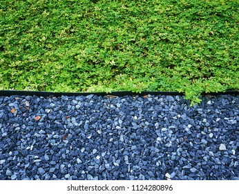 Full Frame Background of High Angle View of Green Plants and Gravel Stones