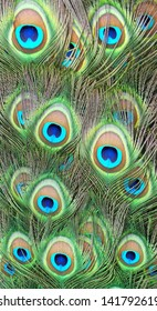Full frame background with peacock feathers