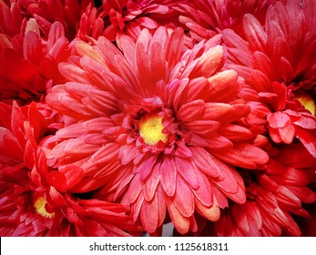 Full Frame Background of Red Artificial Flowers
