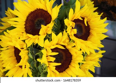 Full frame close-up view of a bunch of sunflowers