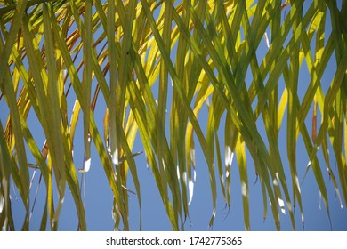 Full frame close-up view of a section of a palm leaf in the sunlight
