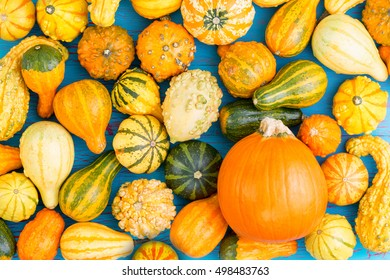 Full frame of decorative squashes for concept background about harvest season or thanksgiving