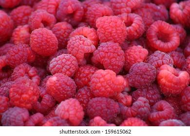 Full frame of fresh picked raspberries closeup
