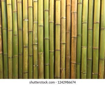 full frame green bamboo stalks background