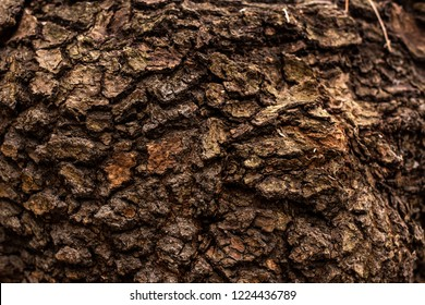 full frame image of old tree trunk background