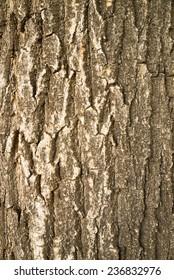 Full frame take of the rugged bark of a pine tree