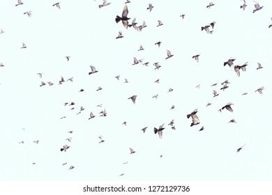 full frame of wild birds flying in clear blue sky