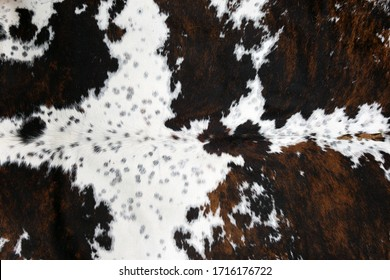 full framed spotted white and brown cow skin texture