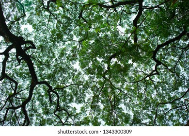 full of green leaves and silhouette branches of growth trees cover almost sky and sunllight made shady area, relax environment and some ray of light could pass through narrow space to beneath area