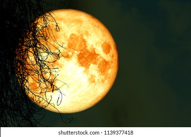 full harvest moon back silhouette dry tree in night sky, Elements of this image furnished by NASA